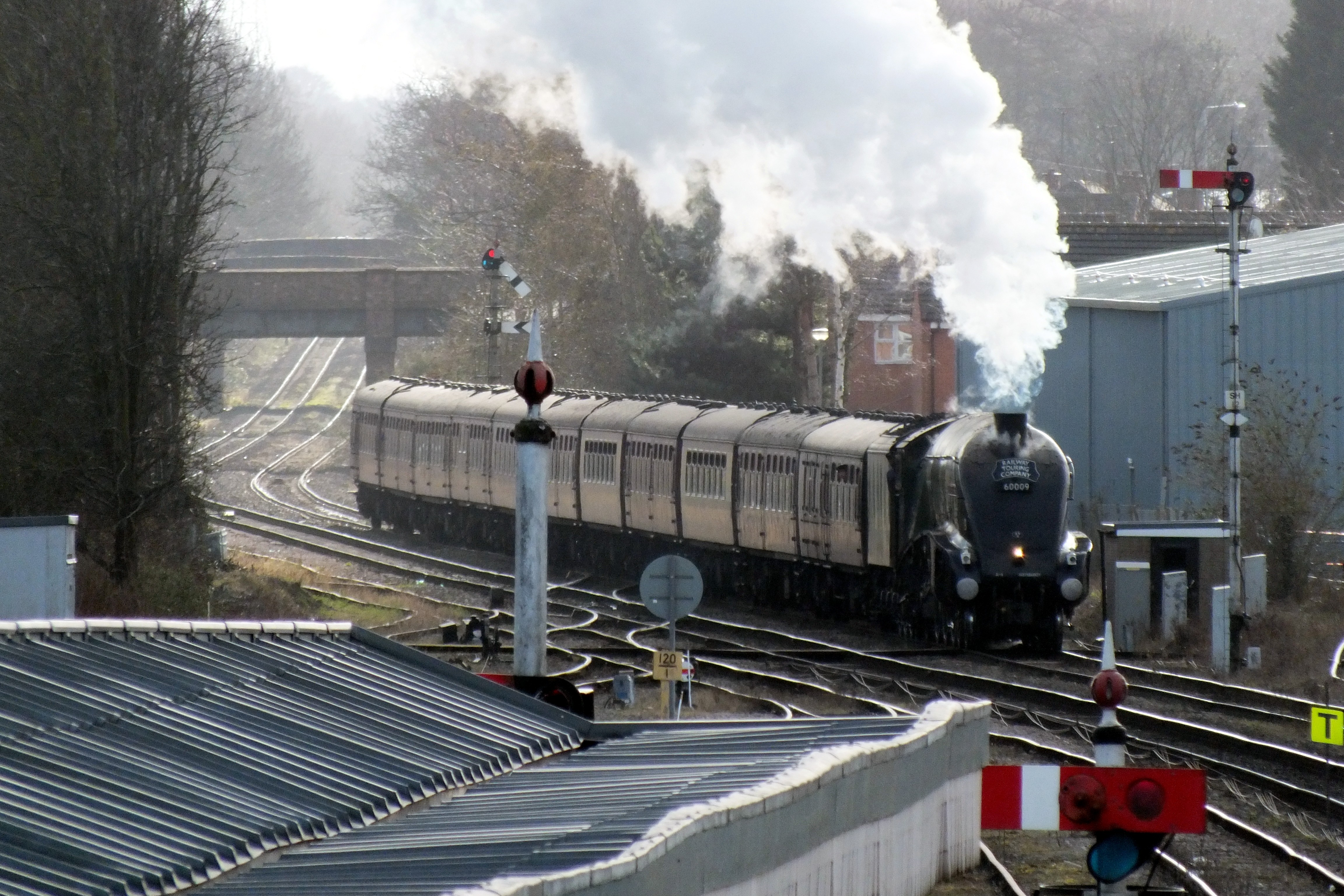 Shrub Hill 16 February 2019 014.JPG